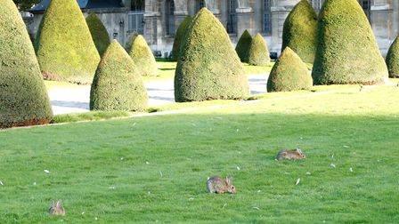Rabbits at Les Invalides. The colony there is Paris' second-biggest, after the one at the bois de Boulogne