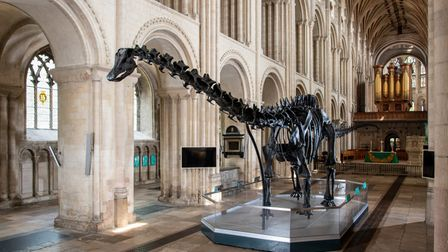 Dippy the dinosaur from the Natural History Museum in the nave of Norwich Cathedral