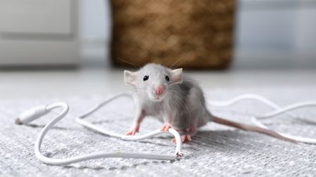 How to remove a mice infestation from an office from Inoculand Pest Control in Central London