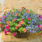 Keeping your hanging baskets looking this good will require someeffort.