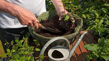 Give new plantings time to become established before you go away.