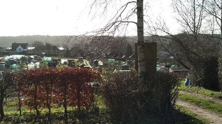 Hillside Allotments in Thorpe St Andrew have been earmarked for a new nature reserve