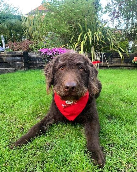 Pets Blood Bank UK will be hosting a clinic at Taverham Vetsthis weekend, pictured is donor dog Alfie.