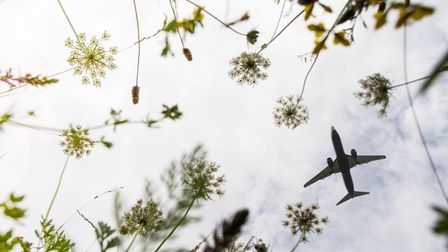 A plane in the sky, with wild flowers on the ground. Image supplied by London Stansted Airport, Essex