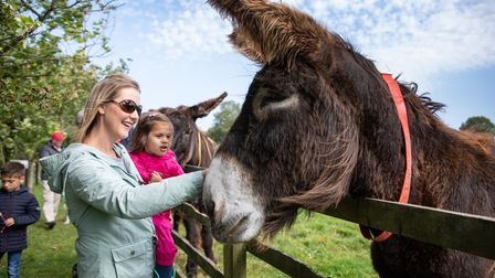 Plenty to see and do at The Donkey Sanctuary this summer