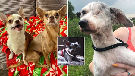 Pets rescued by Ravenswood Pet Rescue