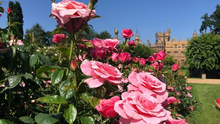 Explore the gardens at Knebworth House in Hertfordshire.