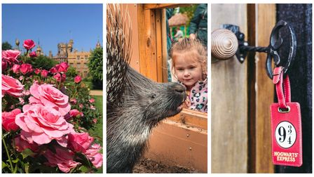 Knebworth House, Paradise Wildlife Park andNorth Hill Farm are places to visit in Hertfordshire.