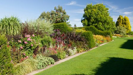 Herbaceous plants can be bought at Royal Horticultural Society garden centres to decorate your garden borders.