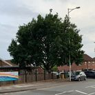 An arboricultural assessment found that the 8m oak was causing structural damage to the nearby community centre