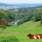 Cows rest on a hillside which drops to a river and decorative bridge in the valley below.
