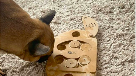 Dog playing with a sustainable toy from Saffron Pawtique, an online store in Saffron Walden, Essex