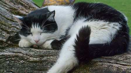Hippo the cat lived on Wood Farm, in Hail Weston, for 16 years.