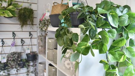 There are a range of indoor and outdoor plants on offer at The Watering Can.