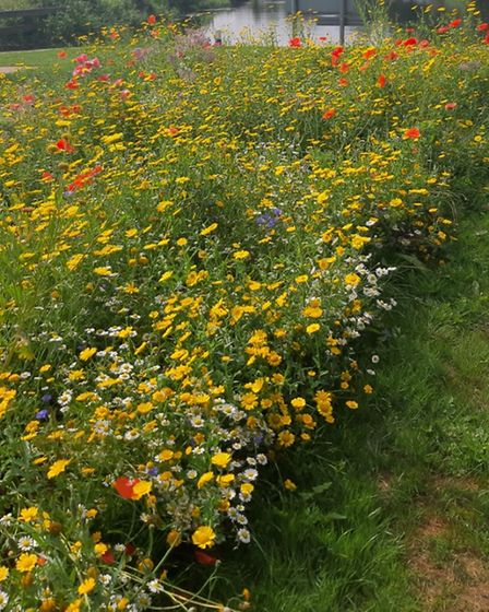 Carol Dumont captured this wild flowers at Houghton Mill.