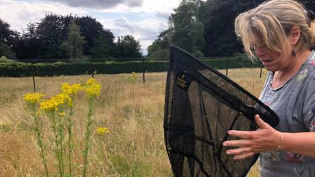 Citizen scientists conducted a wildlife survey in the former grass tennis courts in Heigham Park in Norwich.