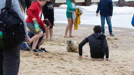 People on the beach standing close to seals