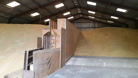 pile of harvested crop in barn
