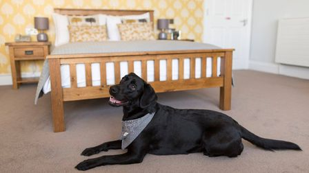Dog-friendly hotels in the South West