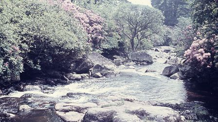 River Avon, one of the first colour slides of the moor.