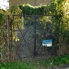 Metal gates with overgrown shrubbery at Limefield Pit, Saffron Walden