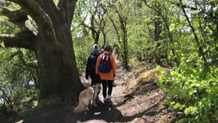 There are South Devon Ramblers' walks to suit everyone.