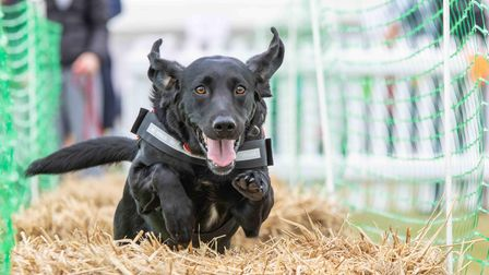 DogFest, the festival for dogs and their owners, returns to Knebworth House in September.