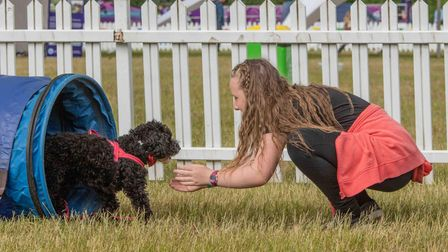 A dog trying the agility tunnel at DogFest, which returns to Knebworth Park in September.