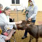 Alfie and Rubik from Mini Donks visited Buckingham Lodge in Carbrooke, near Watton