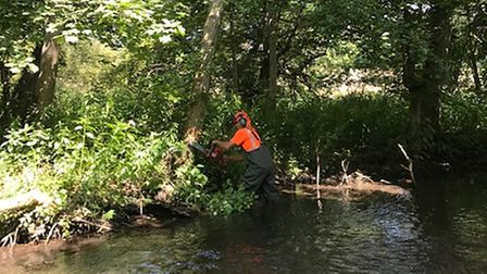 Felling the trees so they fall into the water in a naturalistic way helps improve the habitat of the river.