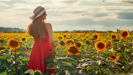 A woman in a pink sundress stands in a field of sunflowers