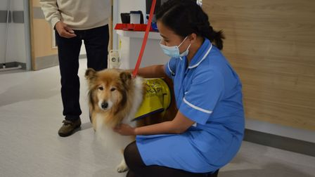 Pets As Therapy (PAT)dog Anushaon the Ingham ward at the Norfolk and Norwich University Hospital.