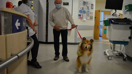 Pet Assisted Therapy dog Anushaon the Heydon Ward at the Norfolk and Norwich University Hospital.