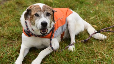Ten-year-old Benny, George Goode's three-legged dog who goes out helping George to litter pick. Pict