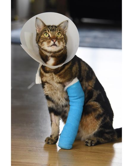 Six-year-old Tyrion, who got his leg caught in an illegal trap near his home in Taverham. Picture: D