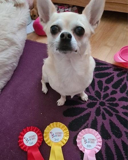 A dog with three rosettes including one red, stating 1st place, Essex