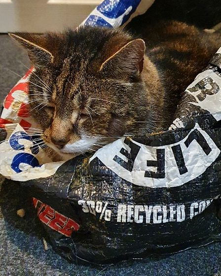 Cat sleeping in a bag which reads: Bag for Life. Essex