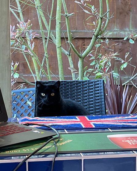 Black cat waiting for a drink at the garden bar, Essex