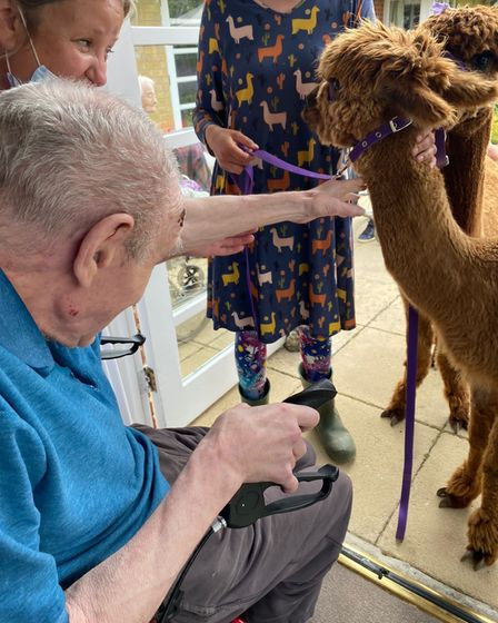 Ray Wooltorton pets one of the alpacas.