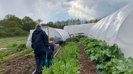 Youngsters get stuck in at Norwich Farmshare