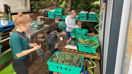 Young people sort produce at Norwich Farmshare