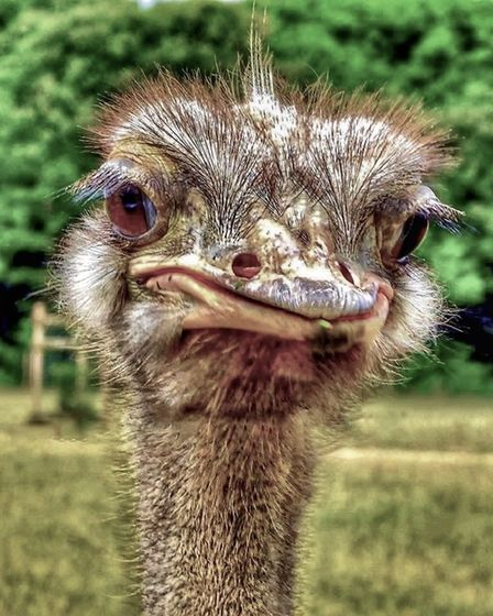Gerry Brown got up close and personal with an ostrich at Johnsons of Old Hurst.