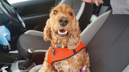 Tracey Clarke's dog is ready to watch the Red Arrows as they take-off from Norwich this afternoon.