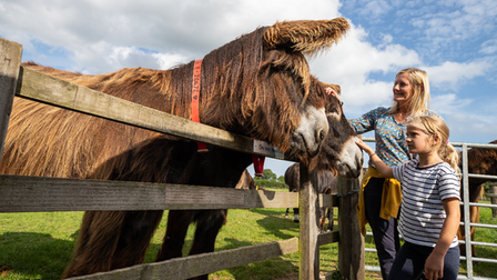 A mother and daughter looking at a donkey at the Donkey Sanctuary in Devon.