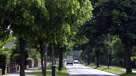 The horse chestnut trees on Bluebell Road, Norwich in 2001