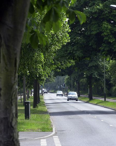 Horse chesnut trees in Bluebell road, Norwich.