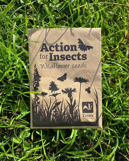 An Essex Wildlife Trust-branded brown paper packet of seeds lying on the grass: Action for Insects