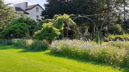 SWISCo helped the Friends of Tessier sow the beds along the wisteria archway with nectar rich annual flowers.