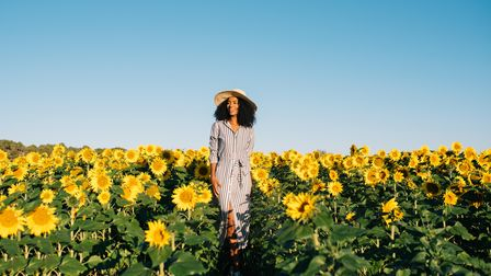 Enjoy the final days of summer strolling through fields of gold picking sunflowers in Kent