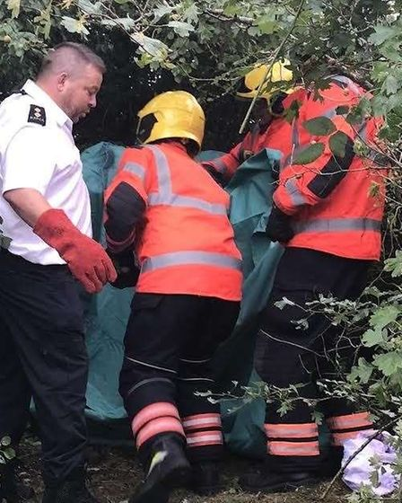 Rescuing 10ft python from tree 'reminiscent of The Jungle Book' in Conington.